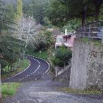 LUNGO VIALE ALBERATO