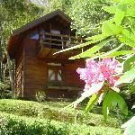 Cottage Agapanto