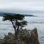 The Lone Cypress, Seventeen Mile Drive
