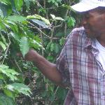 Ransford showing us coffee beans!