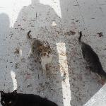 Stray cats filthy apartments floors