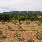 La spirale d'oliviers