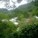 La Bastilla Coffee Estates, view from the Ecolodge