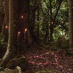 Over 8 KMs of rainforest walks on the property