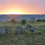 Zebras enjoying the beautiful sunset