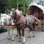 Mit solch einem Planwagen kann man direkt vom Hotel aus Fahrten durch den Frankenwald unternehme