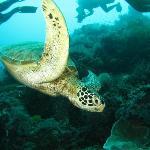 Turtle at Sipadan