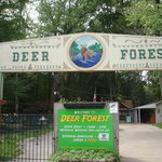 Deer Forest Exotic Animal Sanctuary