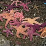 Pile of starfish in the tide pool