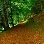 Forest behind Kilmuir