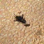 scarafaggi morti nell'hotel sostitutivo