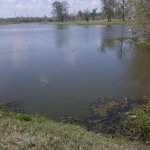 Bayou Segnette State Park