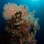 Best Diving