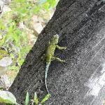 Gecko beim Aufstieg