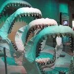 Megalodon jaws of varying size