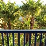 """Vue """"mer frontale"""" derrière les palmiers"""