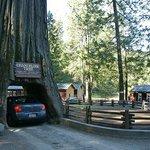 Chandelier Drive-Through Tree