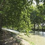 le canal du midi sous les 100 000 platanes
