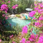 El Vino Pool