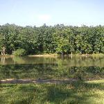 """Vue des bords de l'étang , à quelques mètres du """"camping """"."""