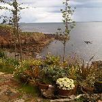 The view from the nearby Crail Tea Shop
