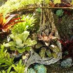 Garden Bromeliads