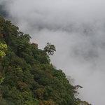 Blick über den Dschungel