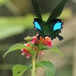 Faszinierende Schmetterlinge