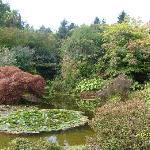 Benmore Gardens Dunoon