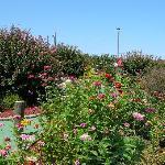 Beautiful Flowers at Long Neck Mini-Golf