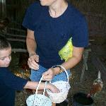 Collecting eggs in the hen house.