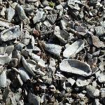Schalen von Muscheln und Seepocken