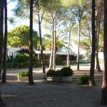 the hotel in the pine trees