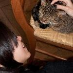 """The cat which lie on that chair almost 24/7 lol...we called her """"Garfield"""""""