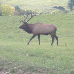Elk - Winslow Hill