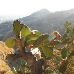 Sicilian prickly pears and stunning views from the hotel grounds