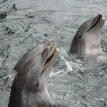 Foto de Dolphin Quest