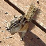 One of the cute chipmunks that we fed!