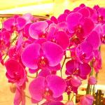 Lobby Blumen Arrangement