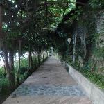 One of the pathways on preperty