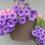 florals outside