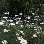 Olveston garden