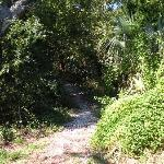 Oyster Shell Pathway