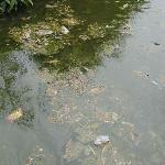 état du lac (bouteilles et sacs plastiques)