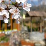 Spring plum again