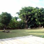 樹齢数十年のガジュマルとデイゴの庭でおくつろぎ下さい。