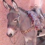 Cous-Cous the donkey who carries your luggage for you when you arrive and leave