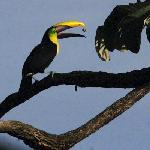 Toucans were a morning treat.