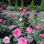 more gorgeous roses from the expansive rose garden