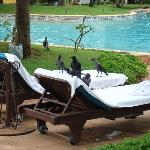 Poolside with crows